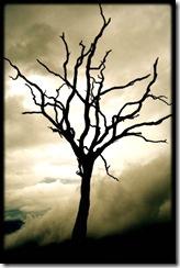 dead-tree_thumb.jpg